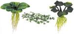 Redbug liane e piante finte for Piante rampicanti finte