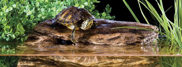 Redbug exo terra turtle cliff filtro a roccia per for Filtro acqua tartarughe